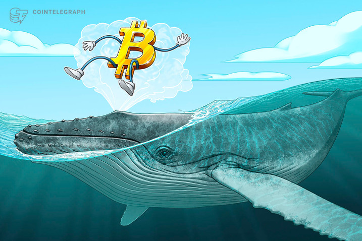 'Millionaire'  whales eat up 90,000 Bitcoin over past 25 days